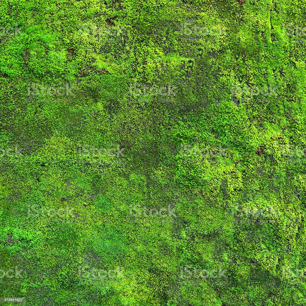 Fresh moss growing on the wall stock photo