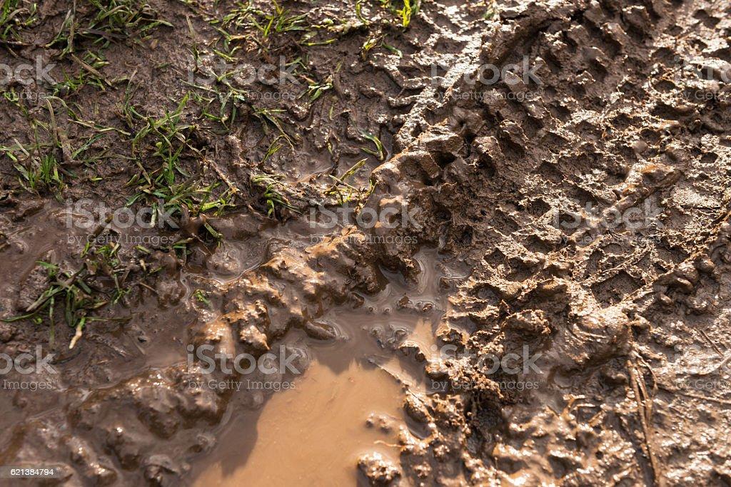 Fresh mountain bike tyre track in wet mud stock photo