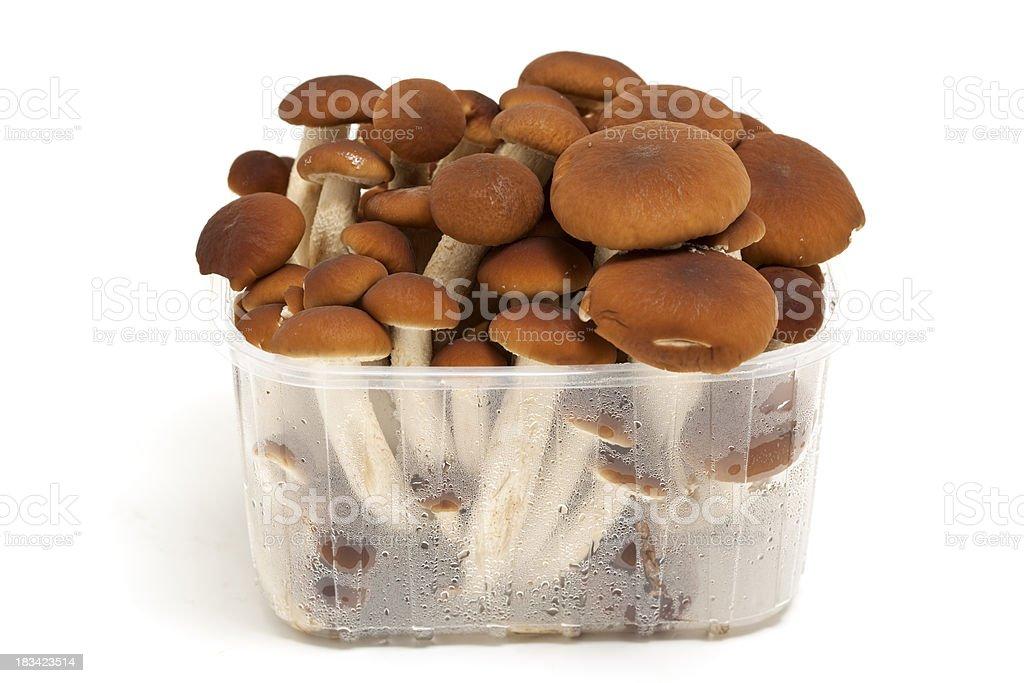 fresh mushrooms in tray royalty-free stock photo