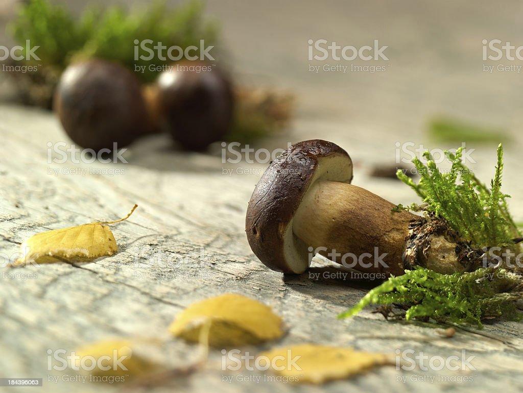 Fresh Mushrooms. royalty-free stock photo