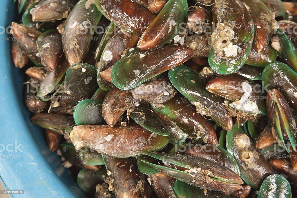 Fresh mussels at the market in Thaillnd royalty-free stock photo
