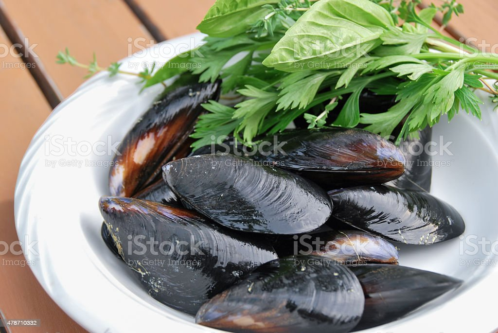 fresh mussle on white plate with herbal leaves stock photo