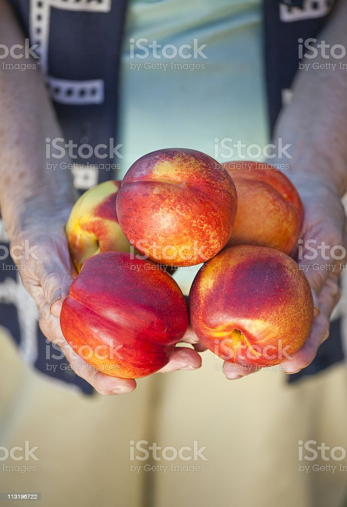 Fresh nectarine on womans hands stock photo