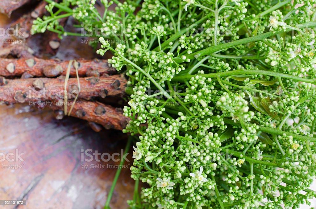 Fresh Neem from Natural Farm. stock photo
