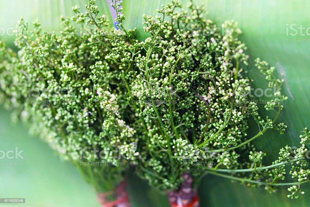 Fresh Neem plant on banana leaf (Azadirachta indica ) Thailand stock photo