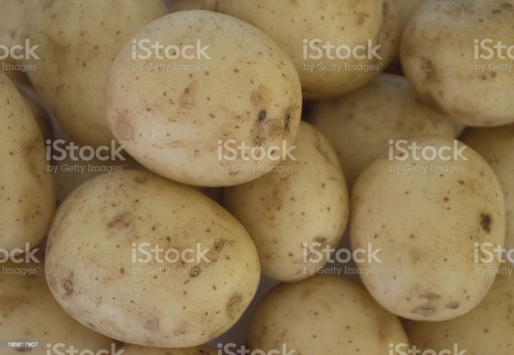 Fresh new potatoes royalty-free stock photo
