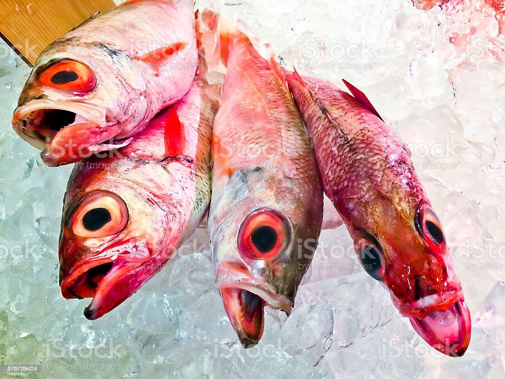 Fresh Nodoguro (rosy seabass) kept with ice stock photo