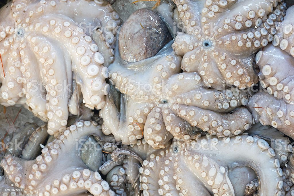Fresh octopuses at the market royalty-free stock photo