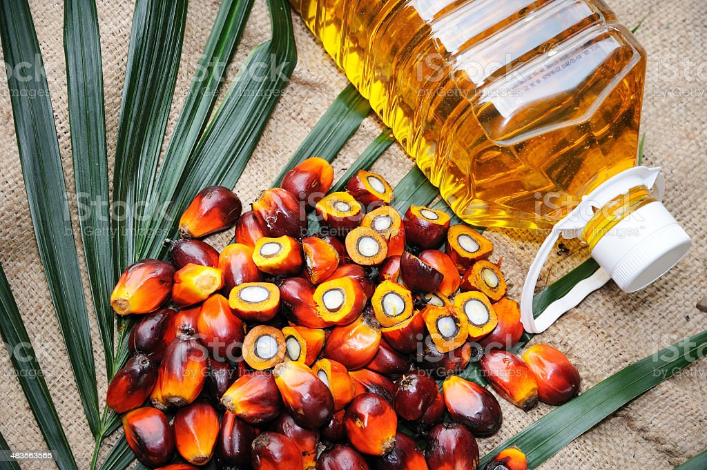 Fresh oil palm fruits stock photo