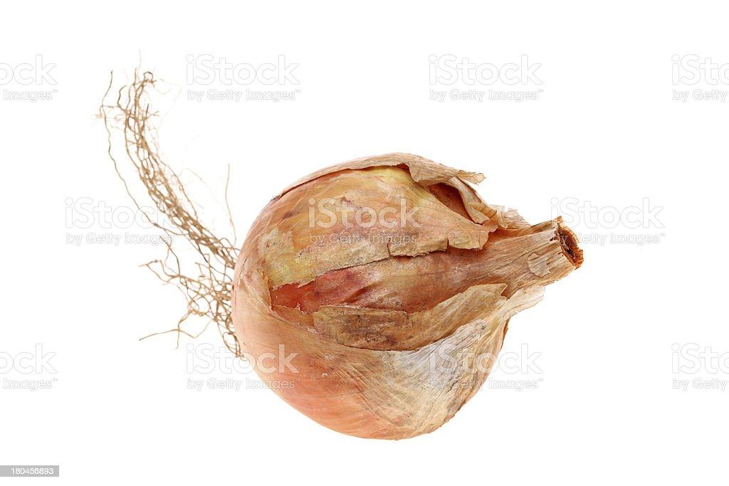 Fresh onion royalty-free stock photo