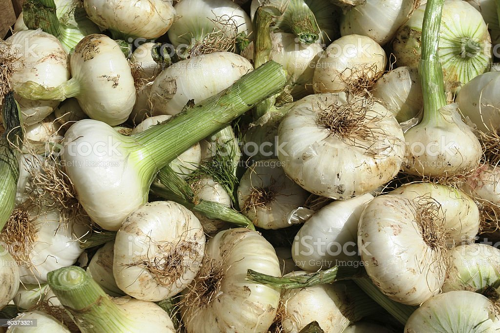 Fresh onions in Rome royalty-free stock photo