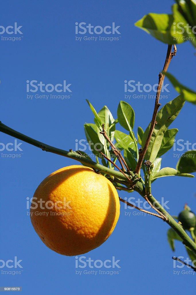 Fresh orange royalty-free stock photo