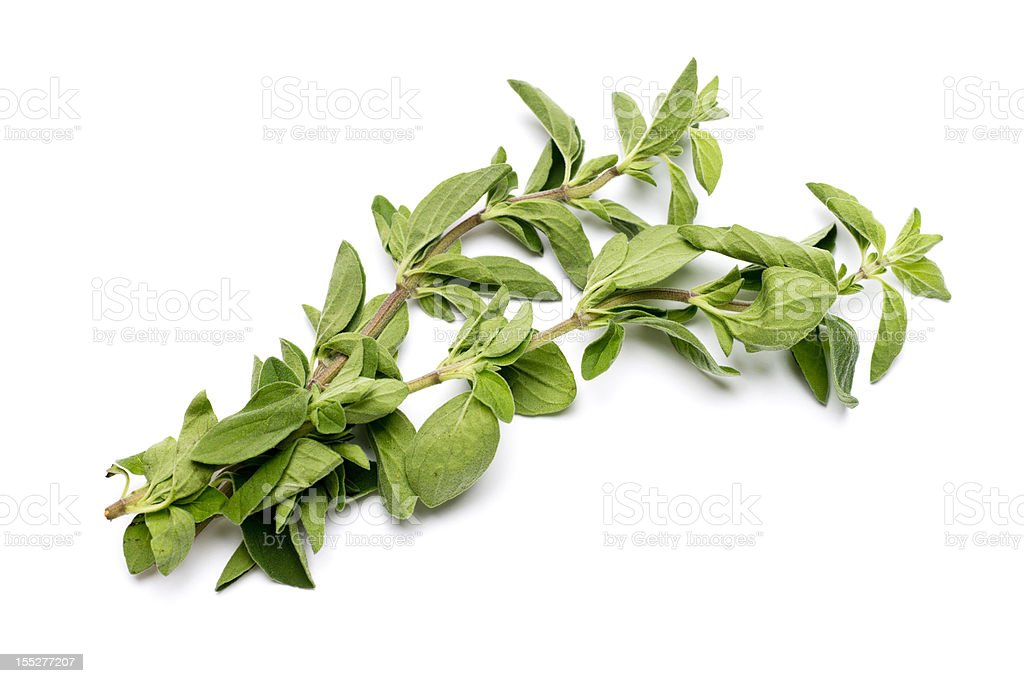 Fresh Oregano Isolated on White stock photo