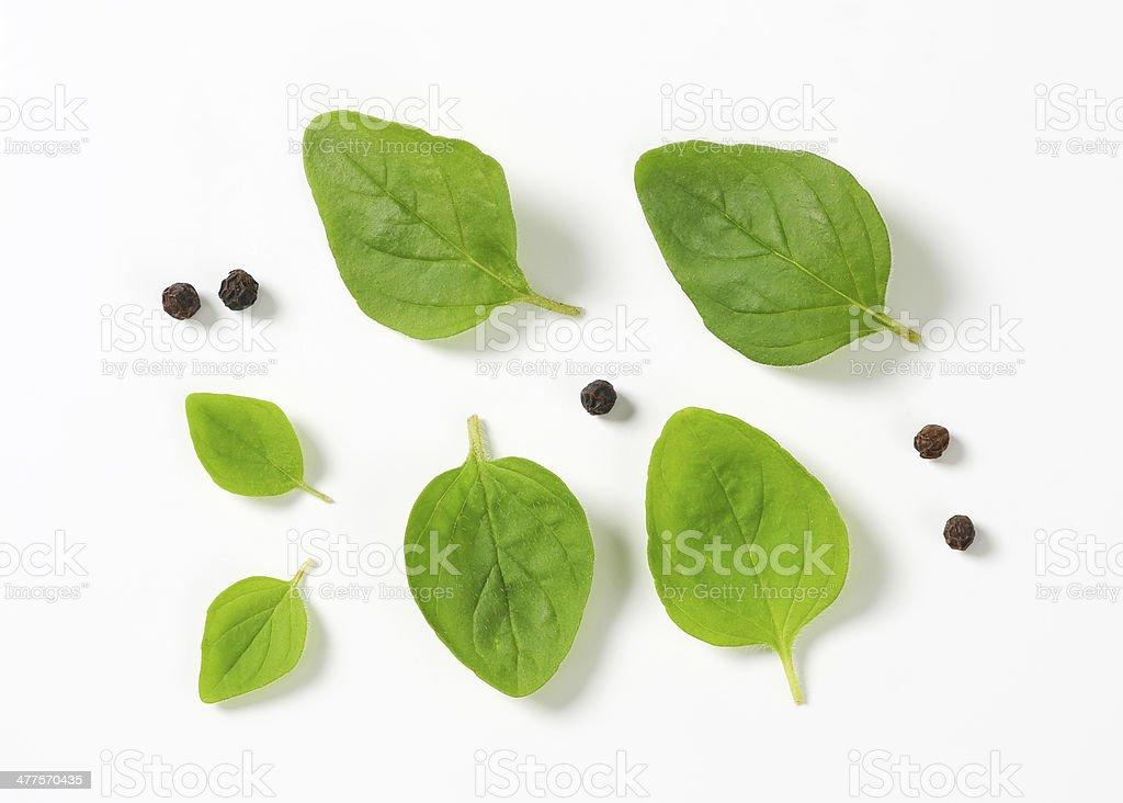 Fresh oregano leaves and peppercorns stock photo