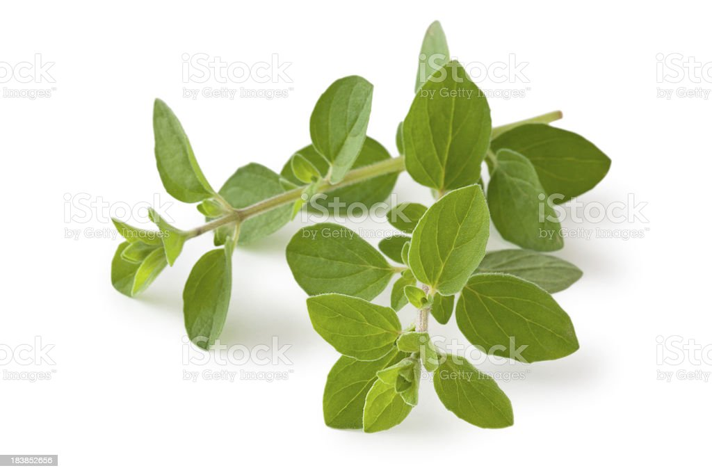 Fresh Oregano. stock photo