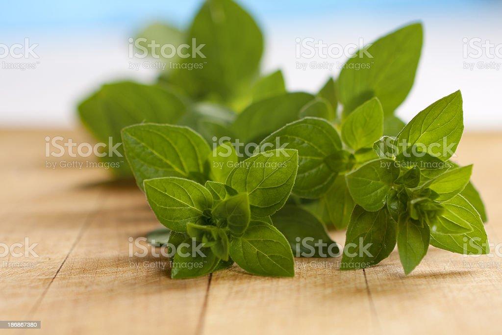 Fresh Oregano stock photo