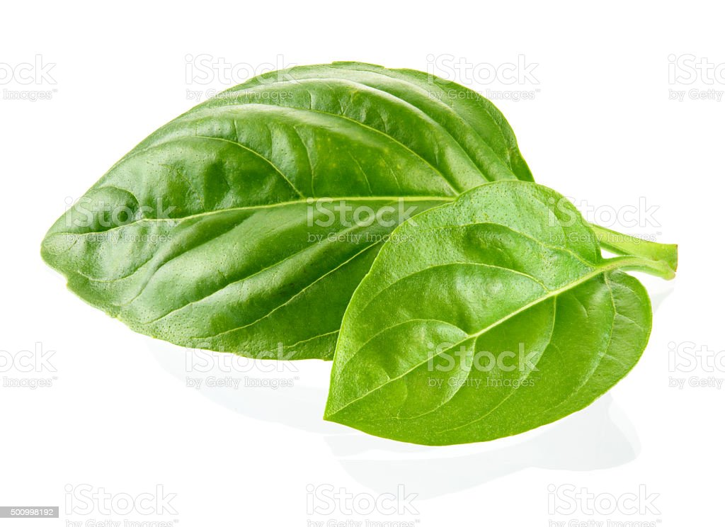 Fresh organic basil leaves isolated on white background stock photo
