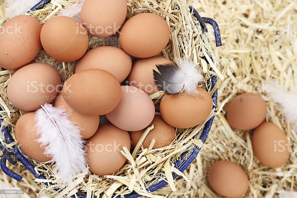Fresh Organic Farm Eggs stock photo