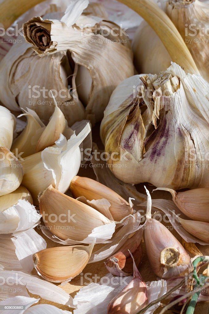 Fresh organic garlic stock photo
