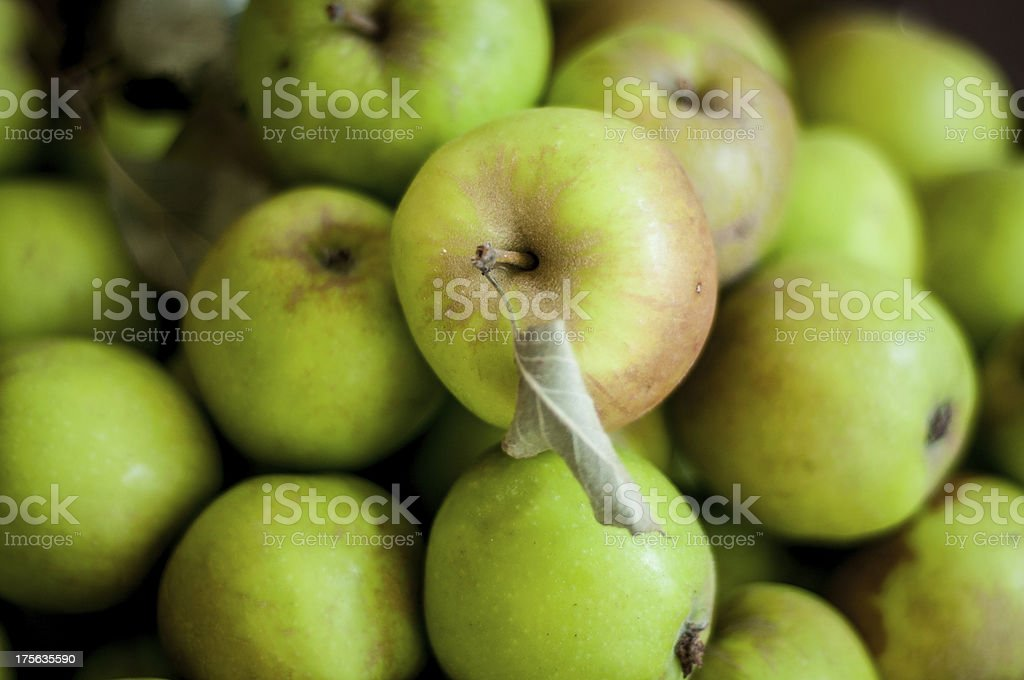 Fresh organic green apples from backyard royalty-free stock photo