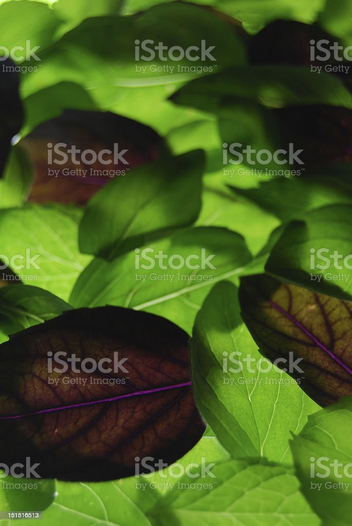 Fresh organic herb background stock photo