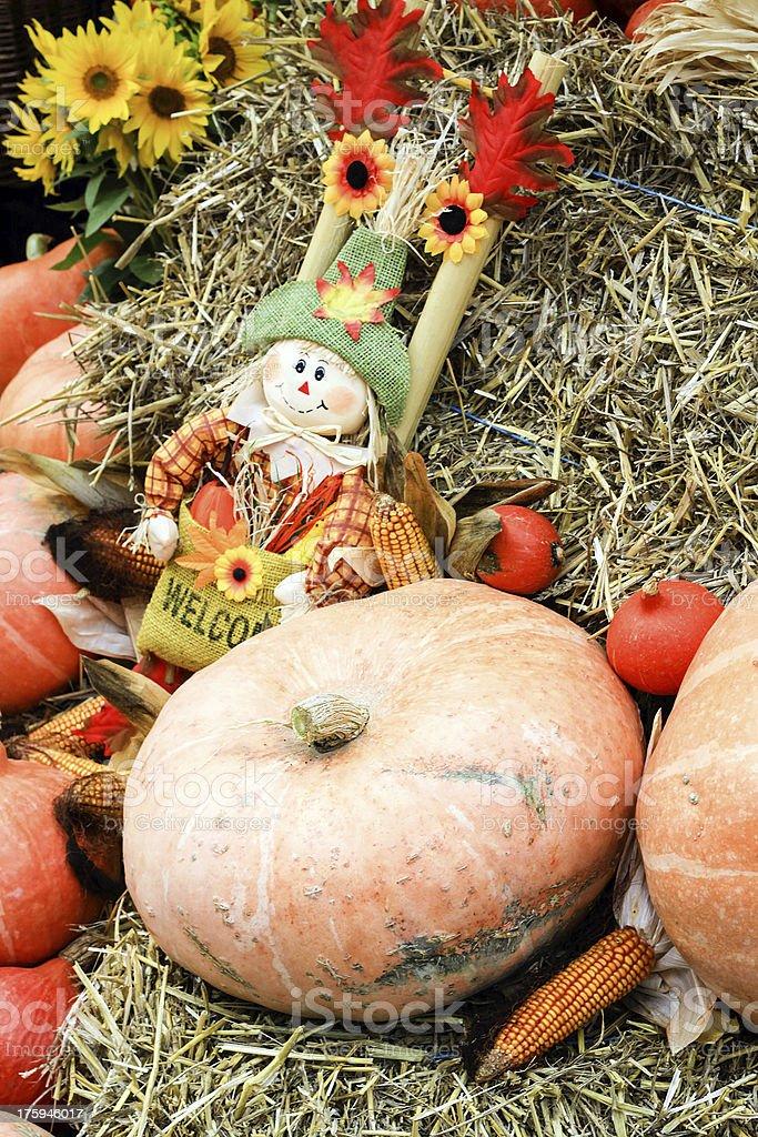 Fresh organic pumpkins royalty-free stock photo