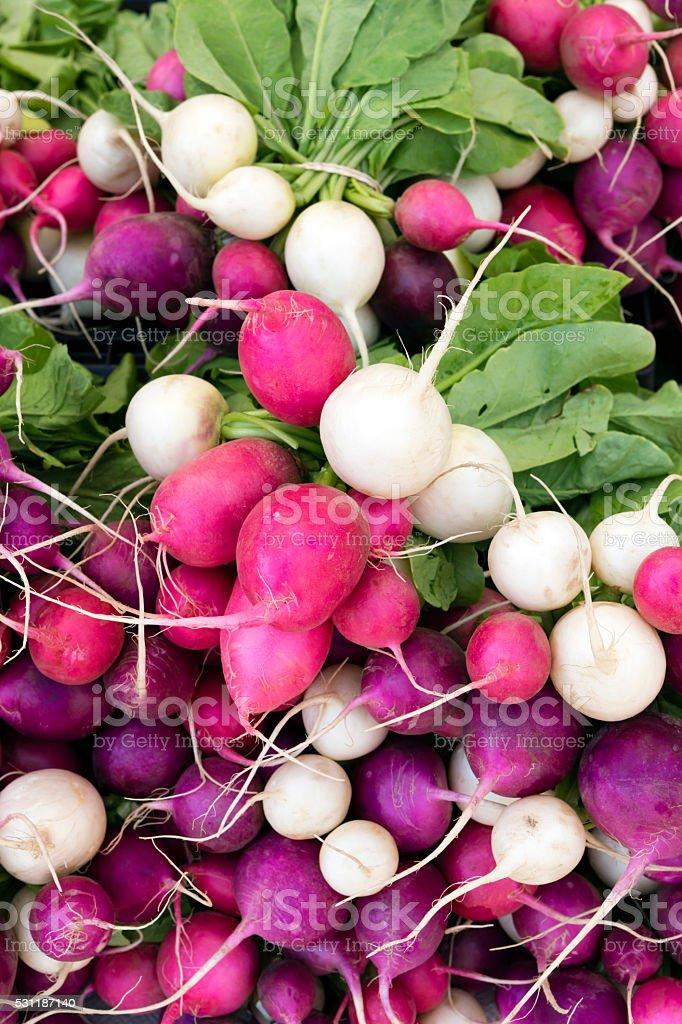 Fresh Organic Radish stock photo