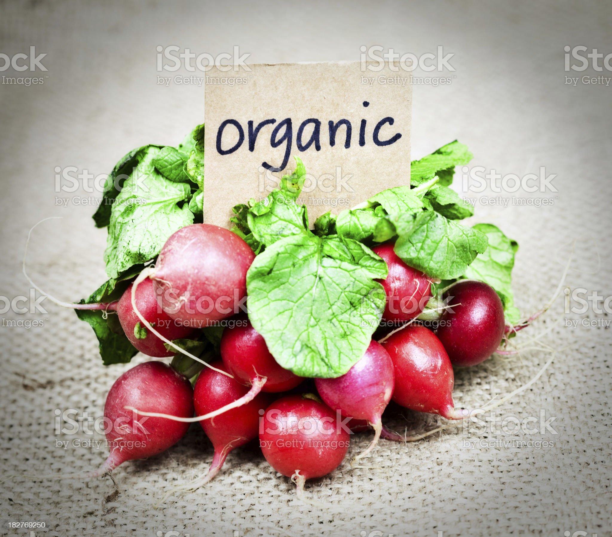 Fresh Organic Radishes royalty-free stock photo
