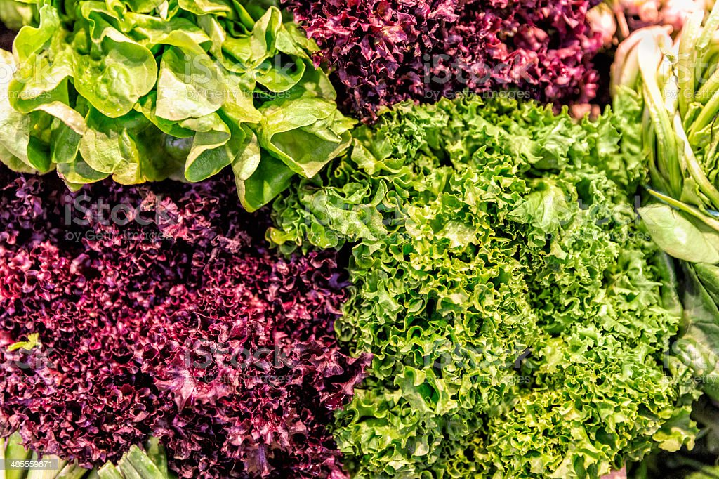 Fresh organic red and green lettuce at farmer's market stock photo