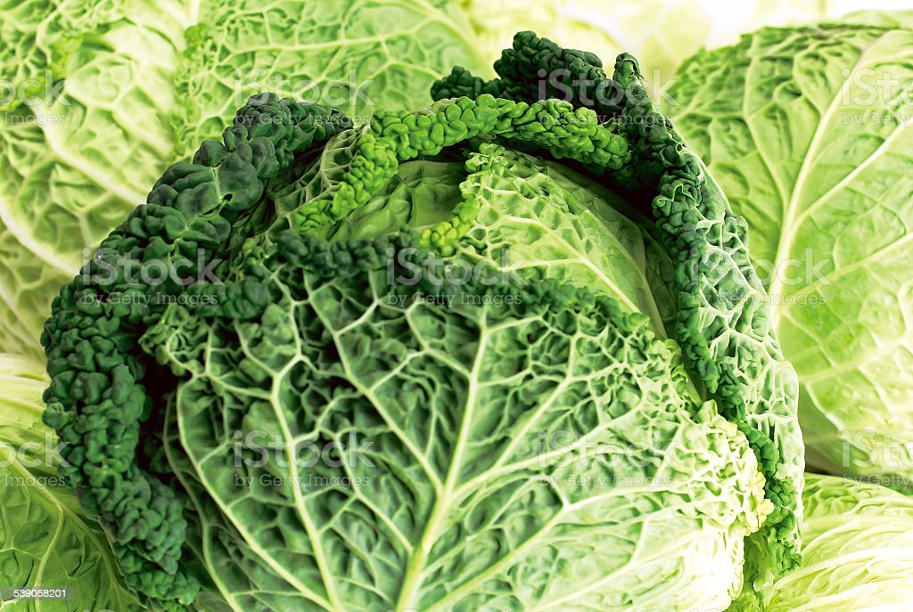 Fresh Organic Savoy Cabbages in Detail stock photo