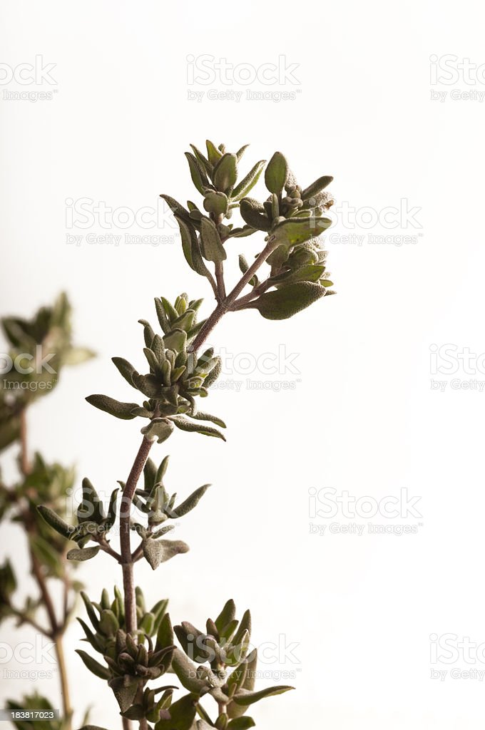 Fresh organic thyme twigs, isolated on white background royalty-free stock photo
