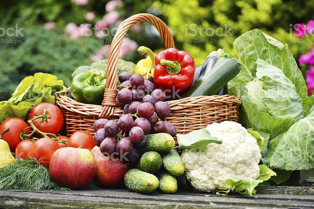 Fresh organic vegetables in the garden stock photo