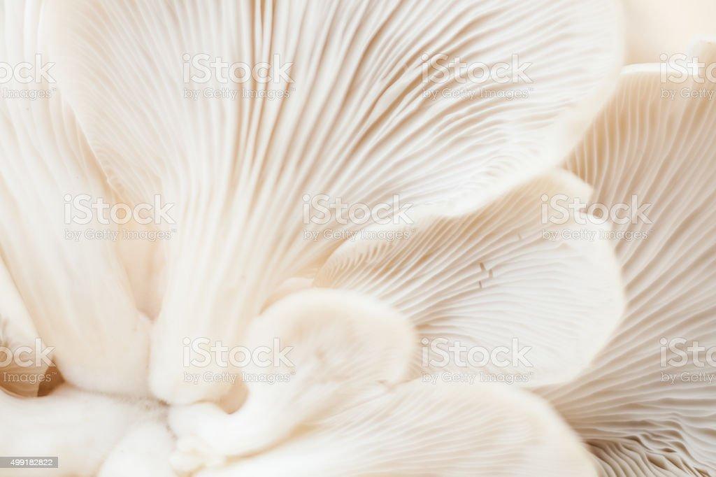 Fresh organic white mushrooms stock photo