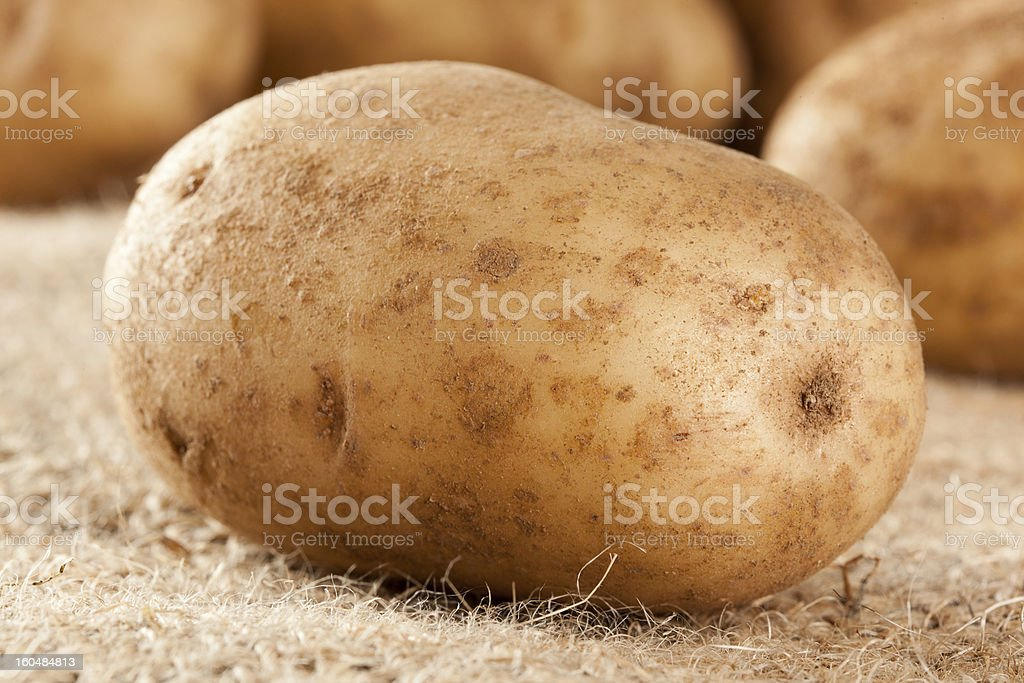 Fresh Organic Whole Potato royalty-free stock photo