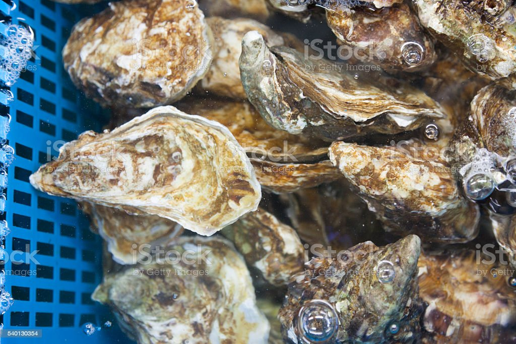 fresh oysters at a fish market in Italy stock photo