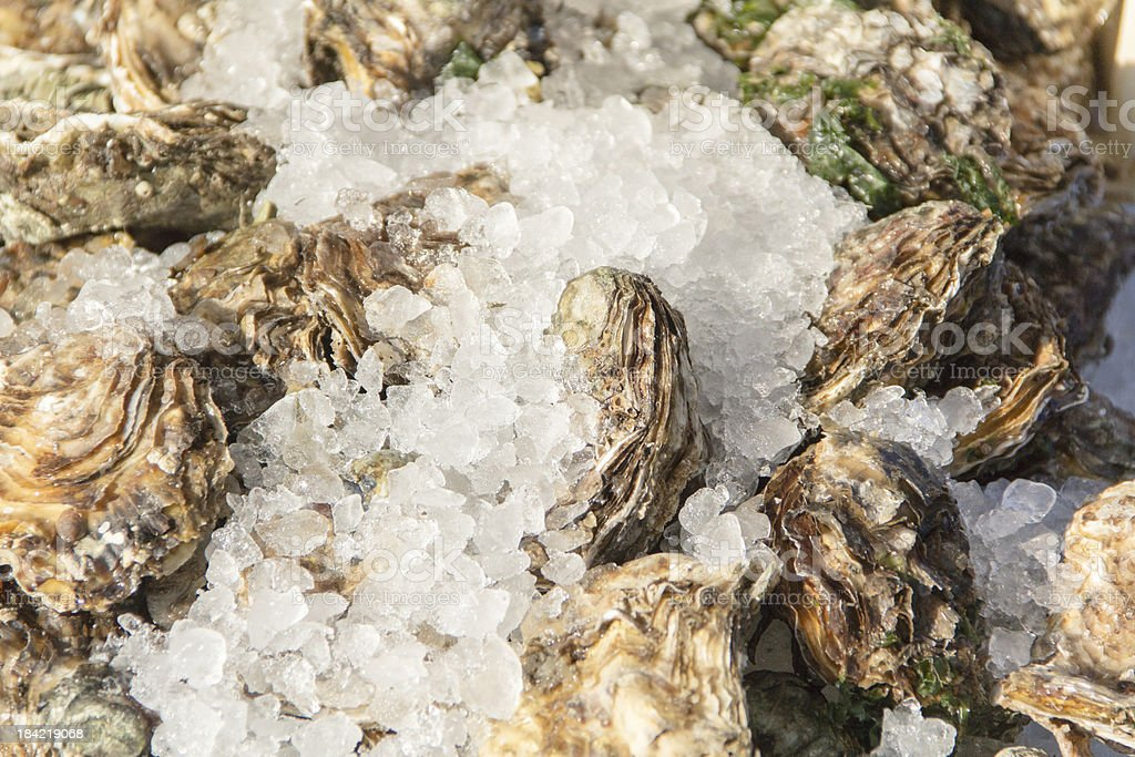 Fresh oysters on ice, seafood, shellfish royalty-free stock photo
