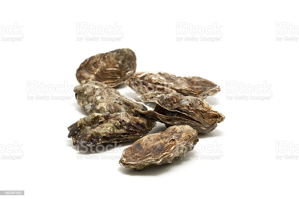fresh oysters royalty-free stock photo