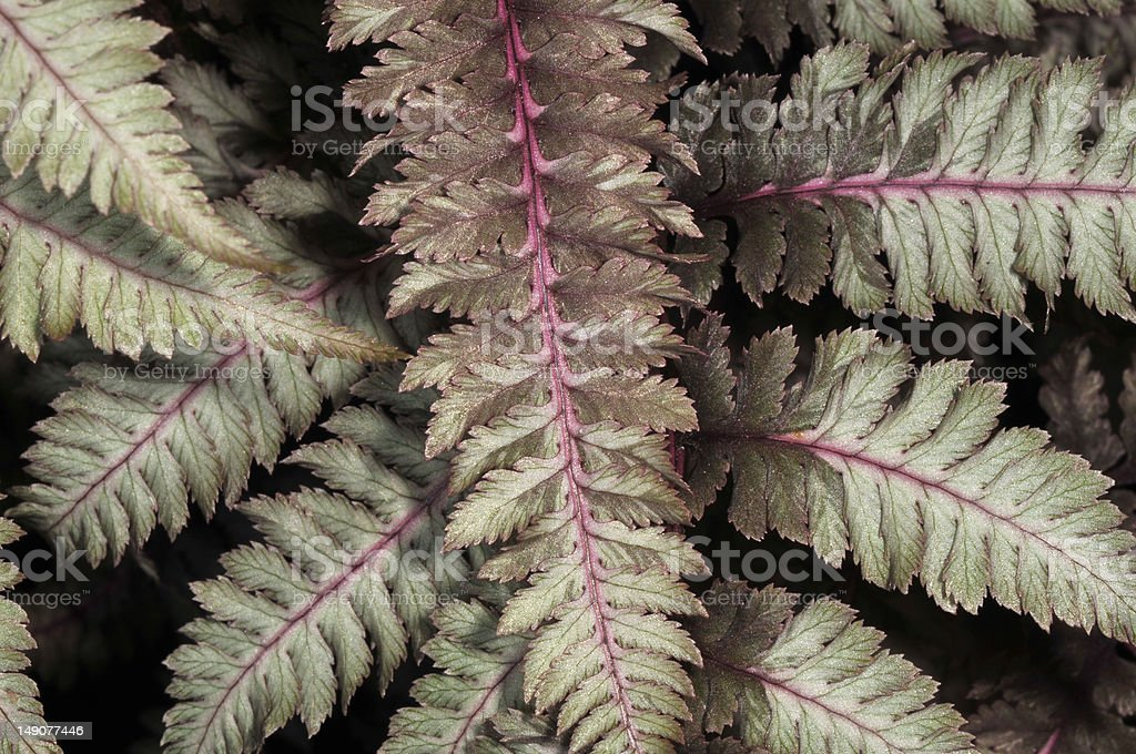 Fresh painted fern leaves stock photo