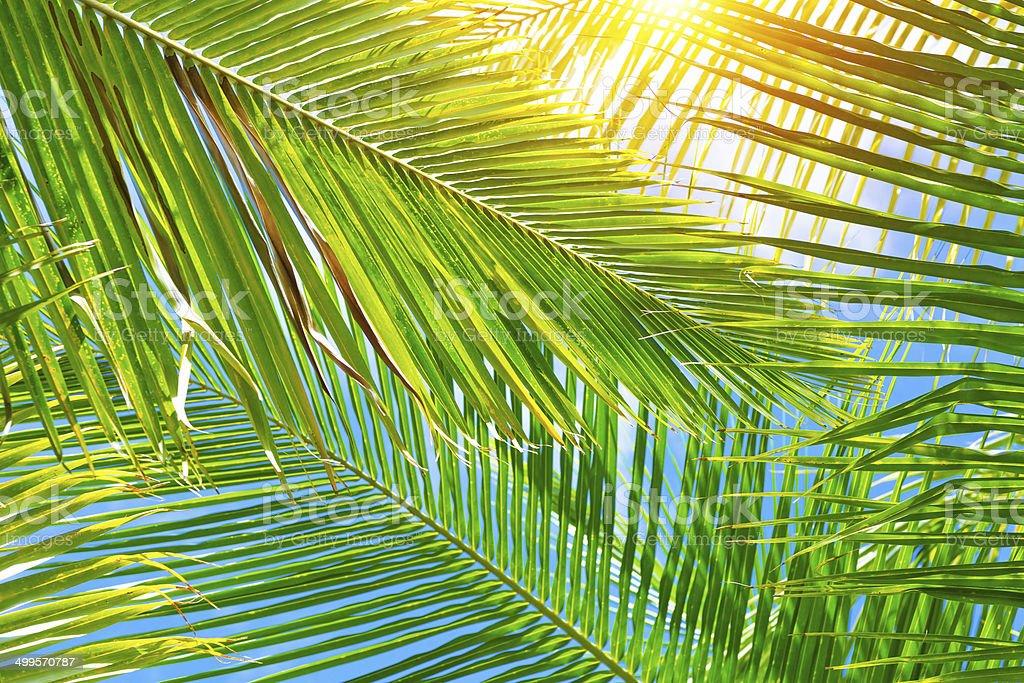 Fresh palm leaves background stock photo