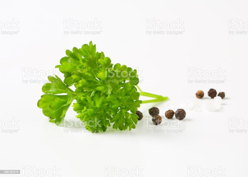Fresh parsley, black peppercorns and salt stock photo
