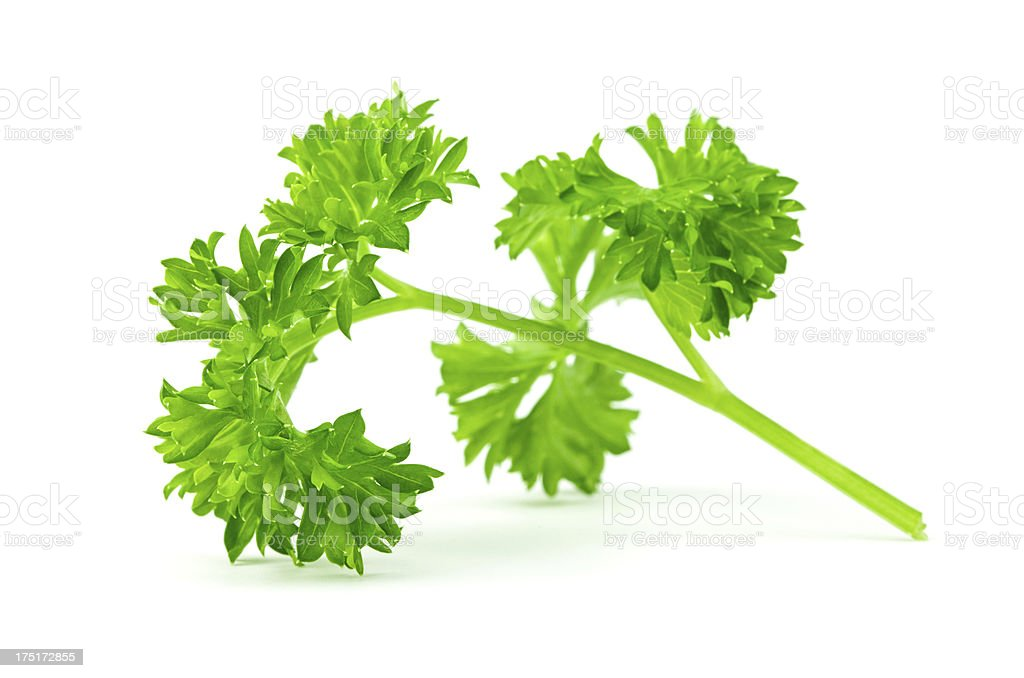 Fresh parsley branch royalty-free stock photo