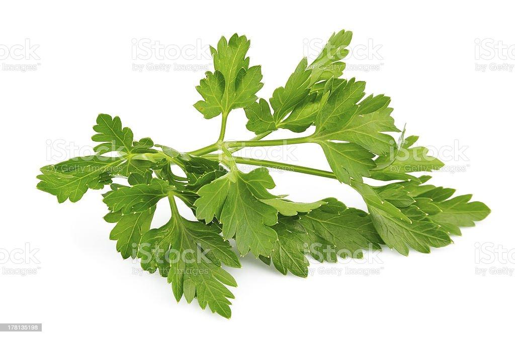 Fresh parsley herb royalty-free stock photo