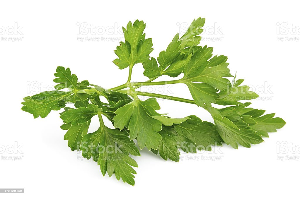 Fresh parsley herb stock photo
