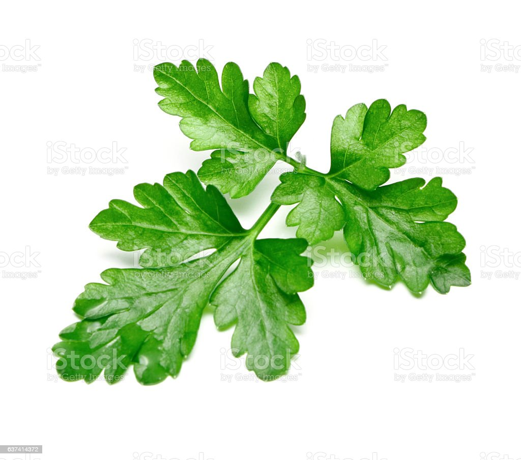 Fresh Parsley isolated stock photo