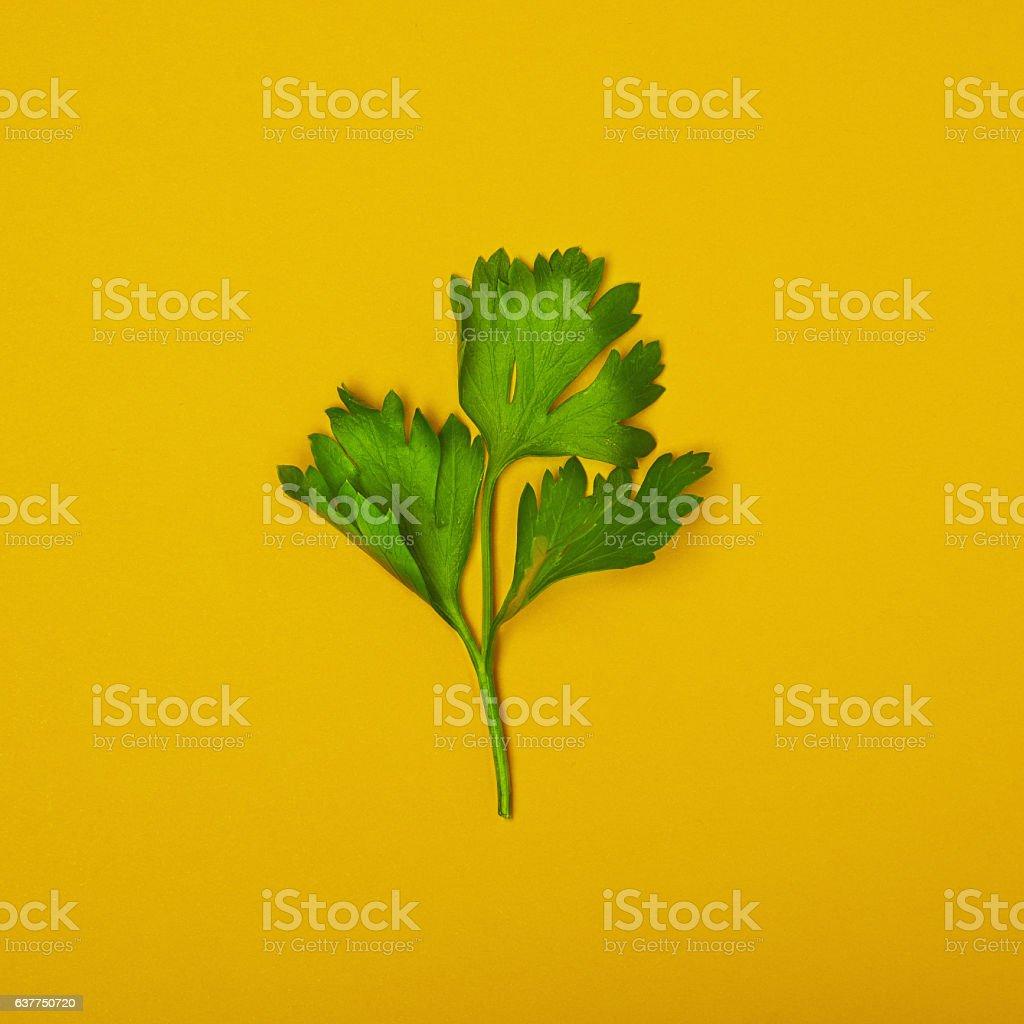 Fresh parsley isolated stock photo