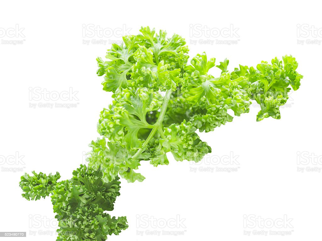 Fresh pasley organic leaf ingredient isolated stock photo