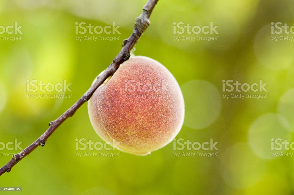 Fresh peach royalty-free stock photo