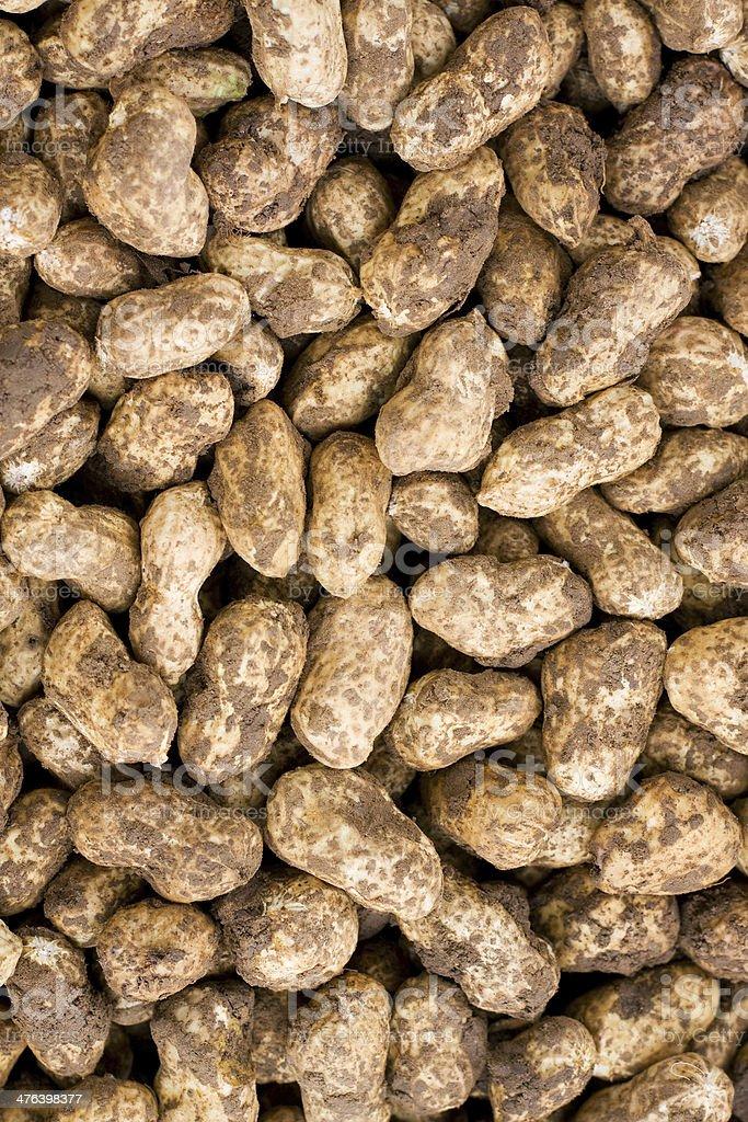 Fresh peanut background royalty-free stock photo