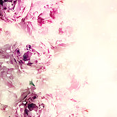 Fresh peony, greeting card for mothers day, 8 March, Valentintin