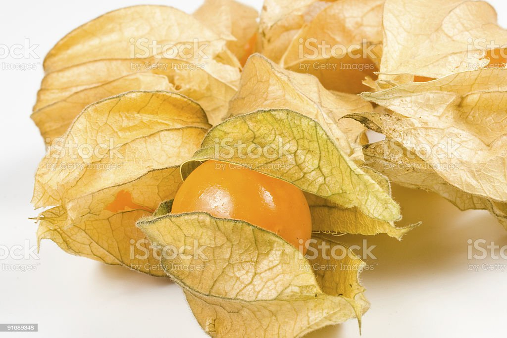 Fresh physalis royalty-free stock photo